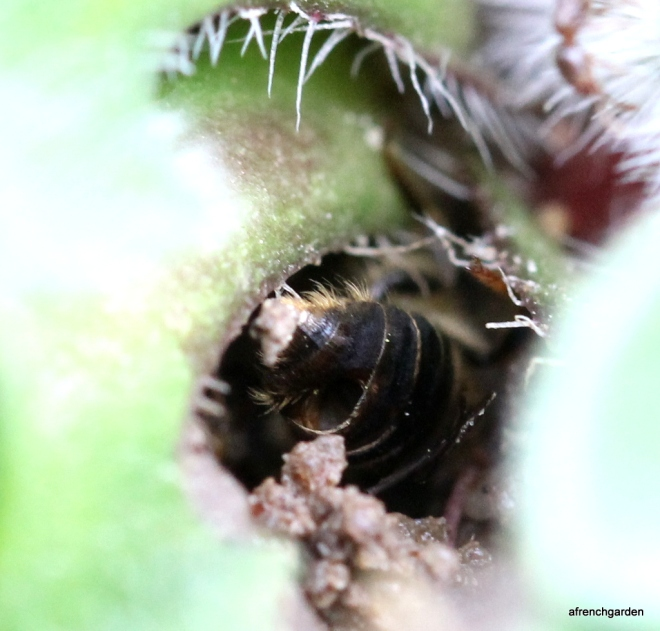 1-bee wounded